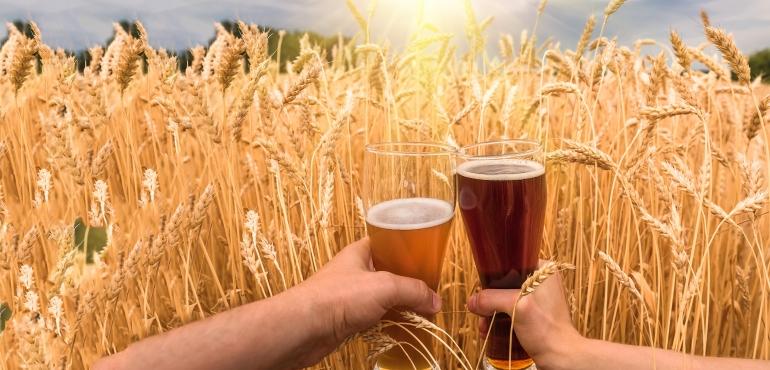 Bicchieri di birra con campo di grano sullo sfondo